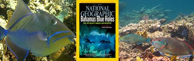Bahamian Conservation Biology
