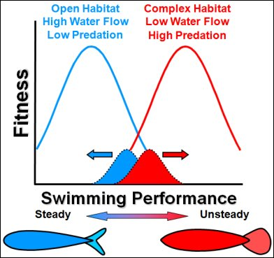 Divergent Natural Selection on Swimming Performance